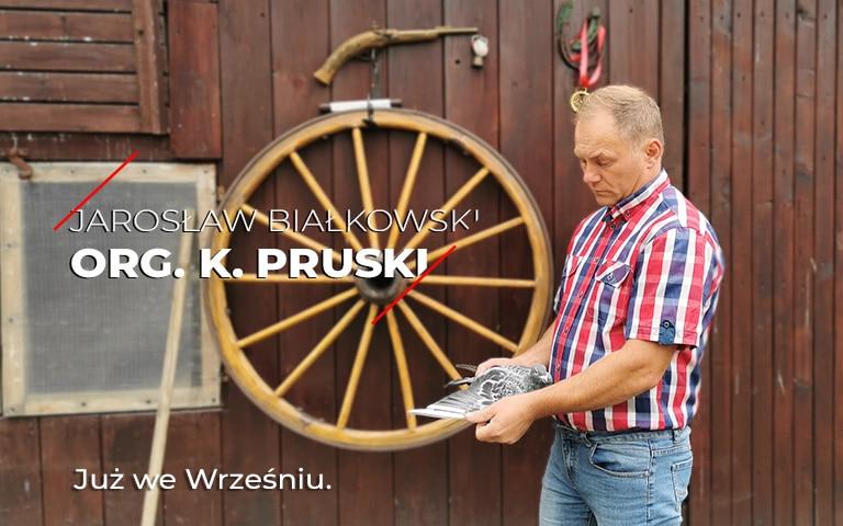 Gołebie K. Pruski Aukcja gołebi
